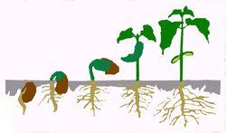 Relativegrowth