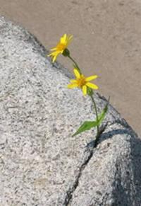 BloomWherePlanted